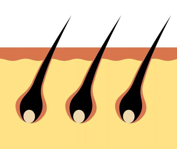 髪の毛と毛根