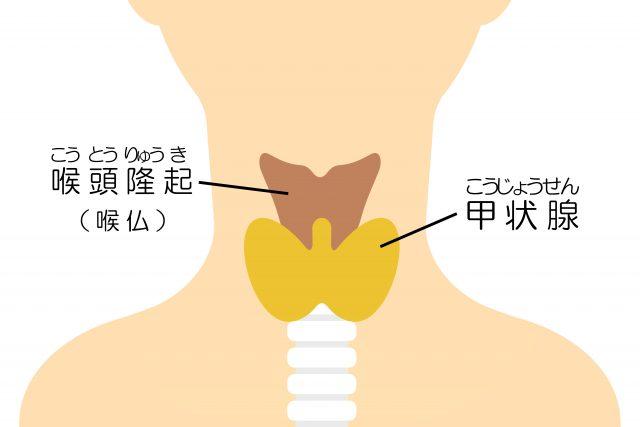 喉仏と甲状腺